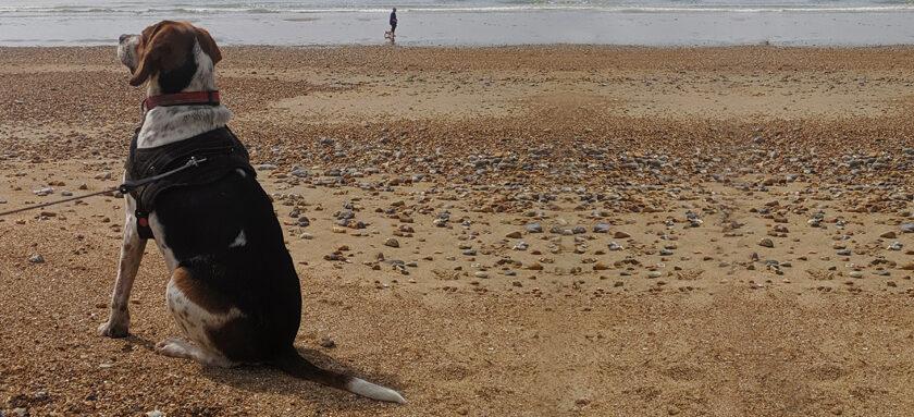 Insurance for dog on a beach