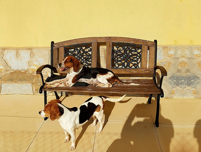 Two beagle dogs on a bench