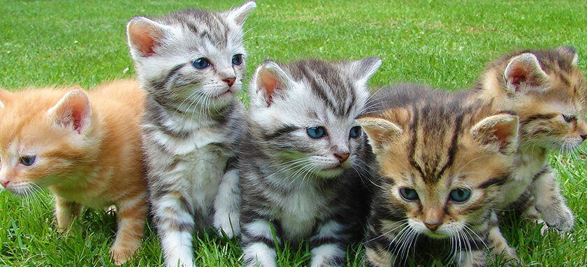 Five Kittens A Row